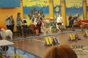 собака выставка верный друг экскурсии продажа щенков хаски дом хаски сергиев посад