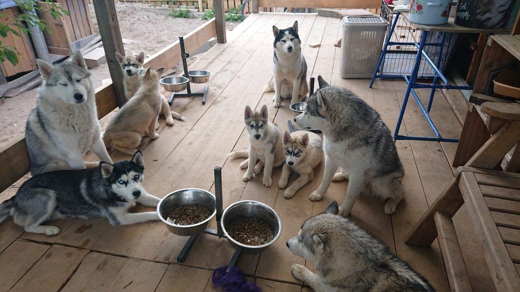 Фокус или Концентрация на собаки на своём хозяине 2