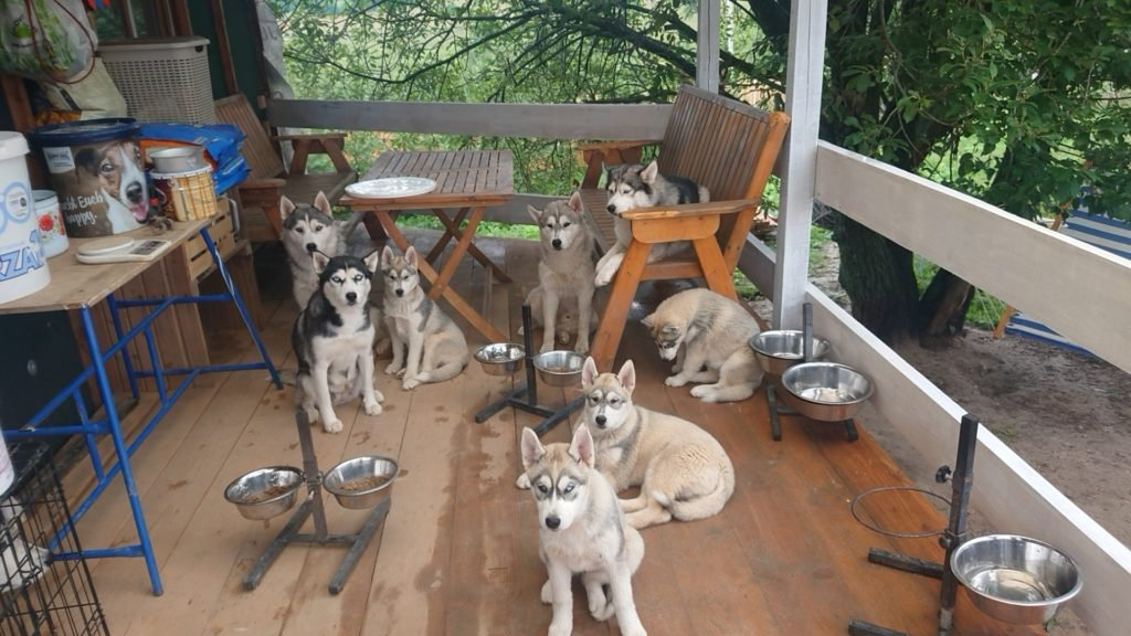 Фокус или Концентрация на собаки на своём хозяине 1