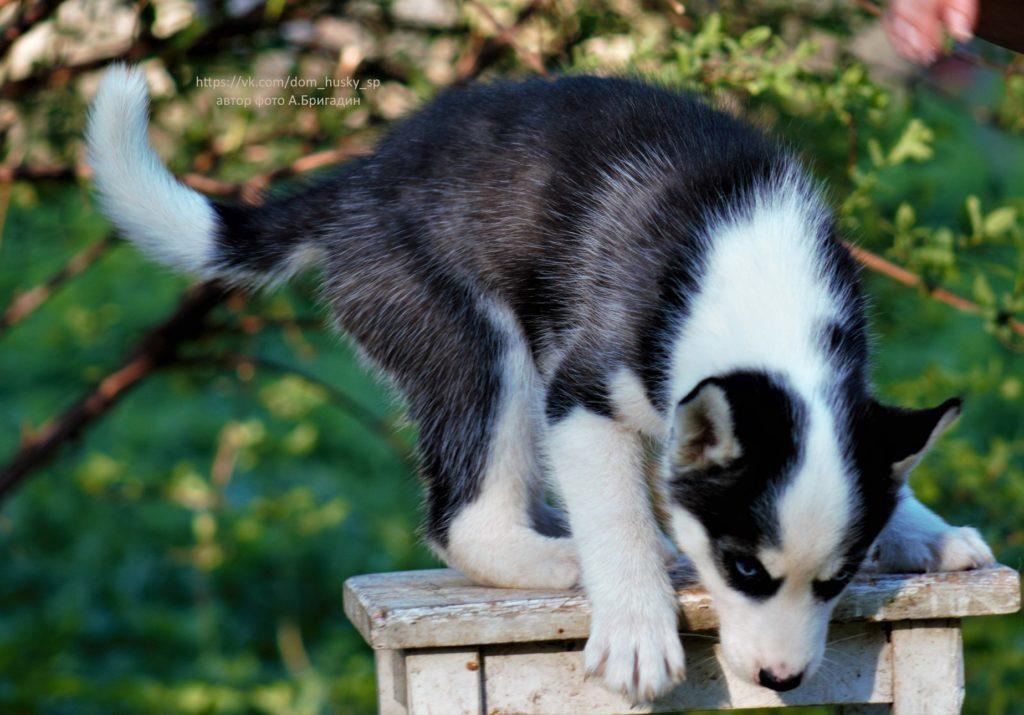 Важные мелочи, которым надо научить щенка в 2 месяца 1
