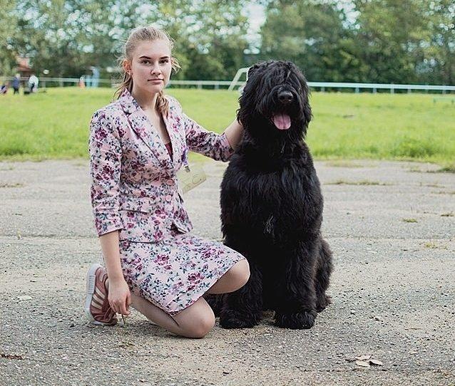 Хендлинг и выставочная дрессировка собак 2