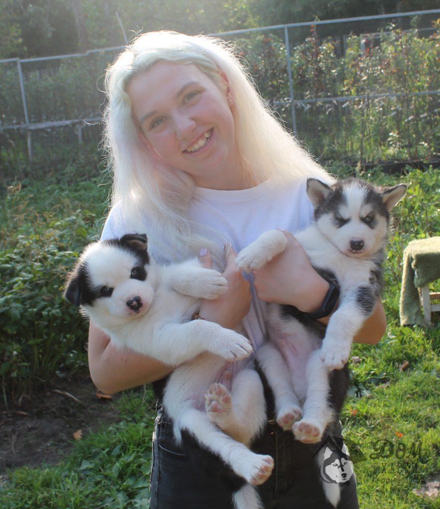 Программа для будущих владельцев собак 1