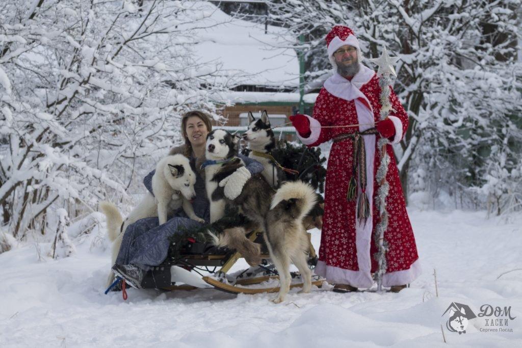 Дед Мороз и его упряжка 2