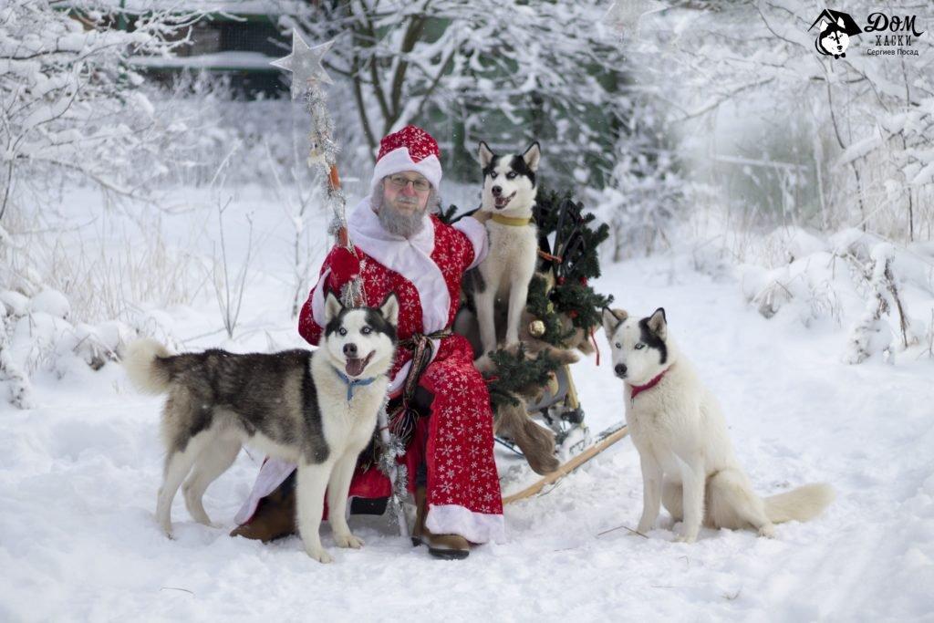 Дед Мороз и его упряжка 3