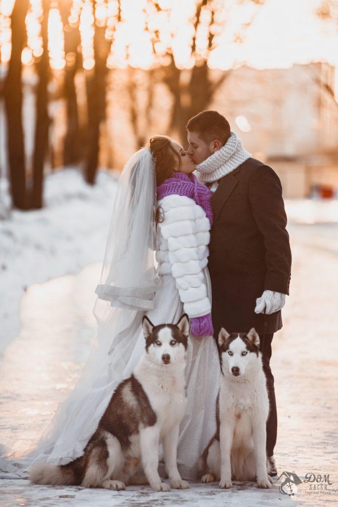 Свадебная фотосессия с Хаски в Москве и Сергиев Посаде. 2