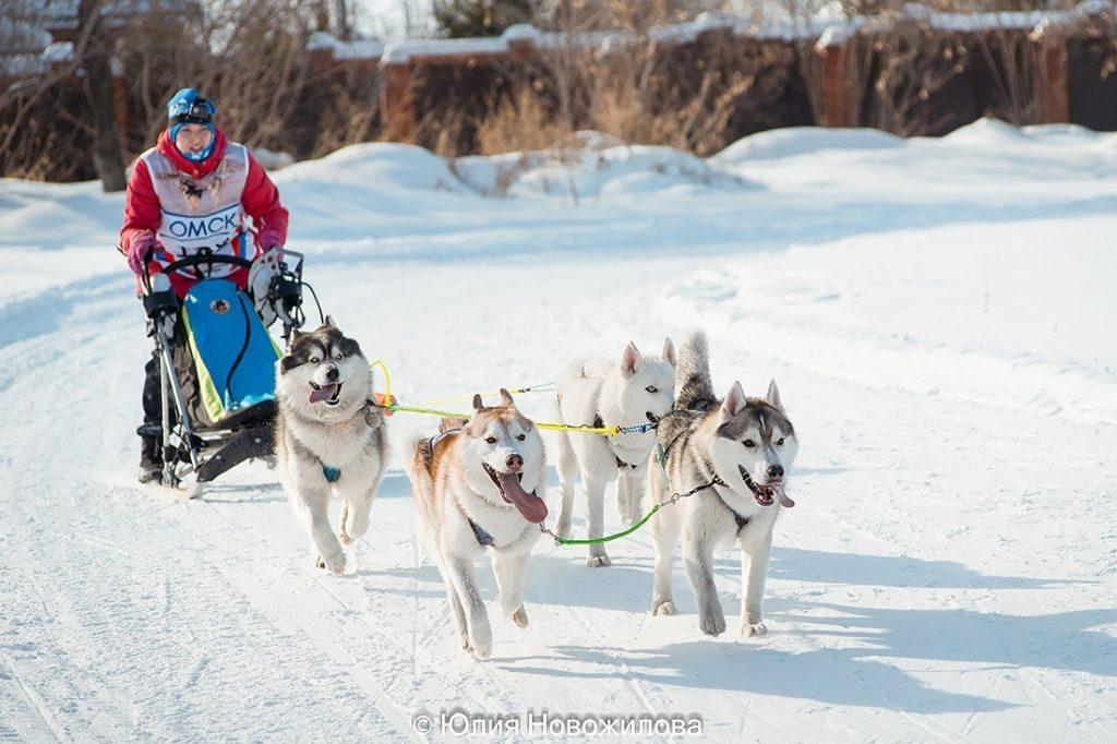 Состоялась Запланированная вязка собак GARMONIA MIRA (Тайга) и TOUCH OF GOLD ARTICO ENCANTO (Тайгер) 12