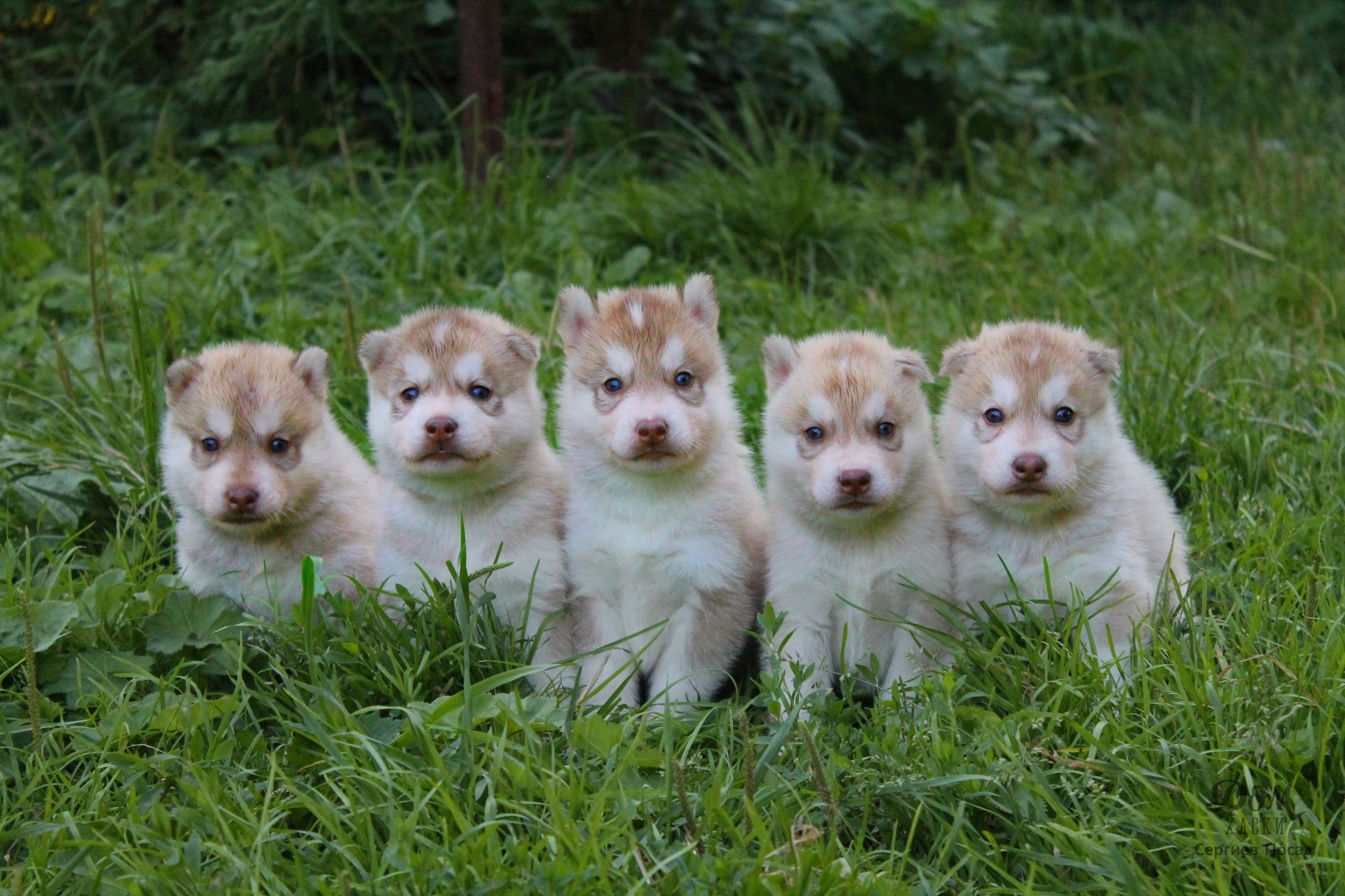 Щенки. Собаки на пристройство 1