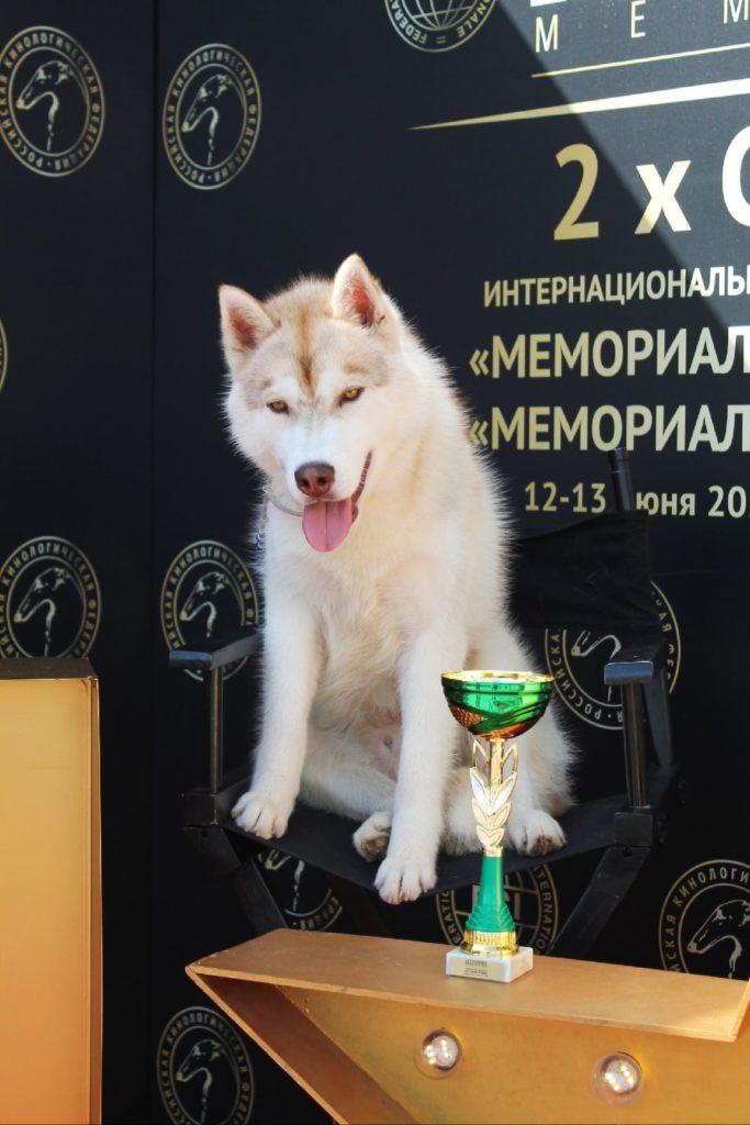 Выставка собак 12-13 июня 2021г. «МЕМОРИАЛ АП МАЗОВЕРА 2021+2020» CACIB Maxima Park / Dog Show FCI 3