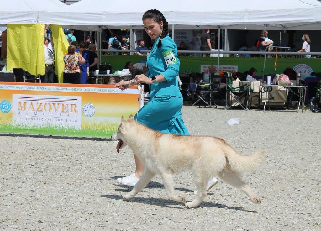 Выставка собак 12-13 июня 2021г. «МЕМОРИАЛ АП МАЗОВЕРА 2021+2020» CACIB Maxima Park / Dog Show FCI 2